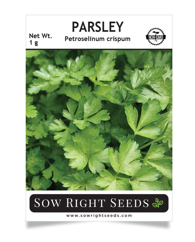 Sow Right Seeds - Parsley Seed for Planting - 600 Non-GMO Heirloom Seeds with Instructions to Planting and Grow a Kitchen Herb Garden, Indoor or Outdoor; Great Gardening Gift
