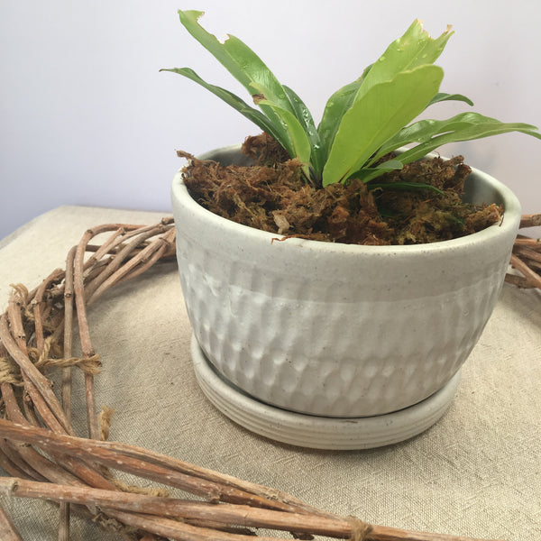Plant Pot with tray - Crusty White