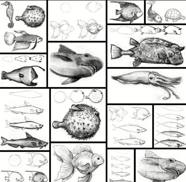 Learn How to Draw Aquatic Animals - For the Absolute Beginner
