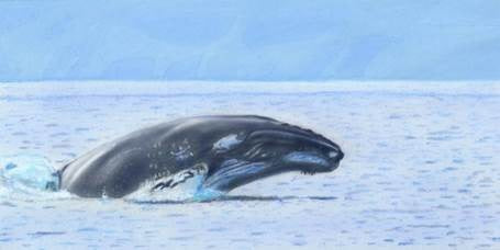 Learn How to Airbrush Aquatic Animals for the Beginner-Learn to Draw Series (Humpback Whale)