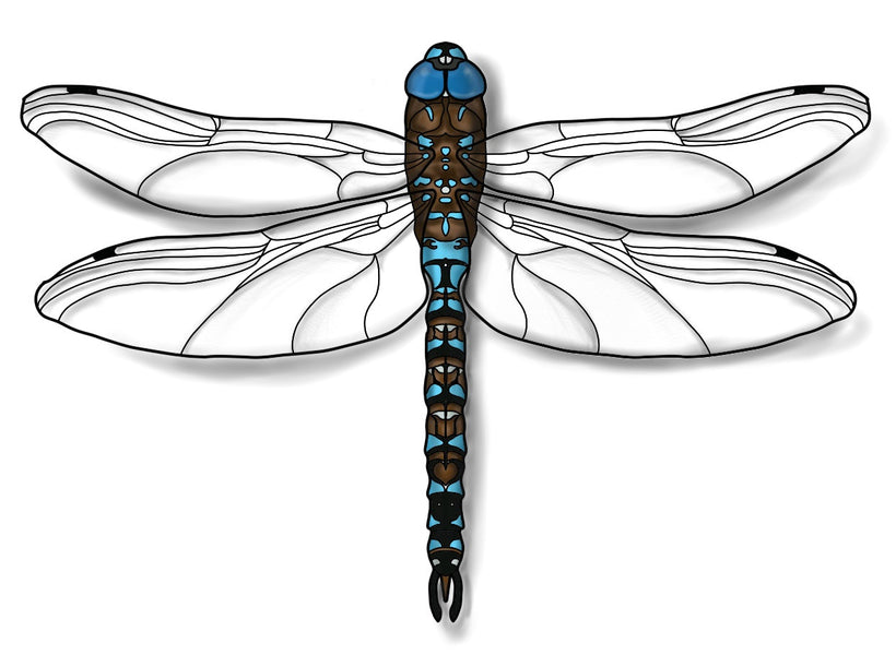 How to Draw a Blue-eyed Darner Dragonfly Easily