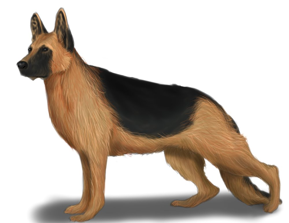 How To Draw A German Shepherd Learn To Draw Books And Supplies