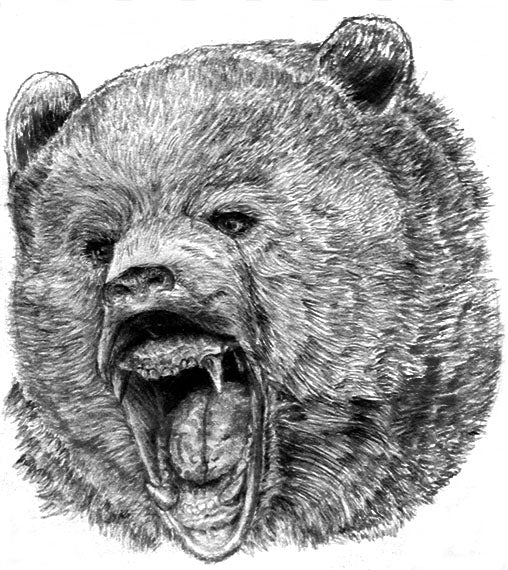 How to Draw a Growling Bear Using Pencil