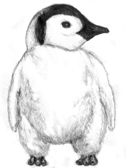 How to draw a penguin using pencil