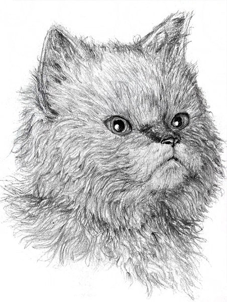 How to Draw Cats with Pencil for the Absolute Beginner