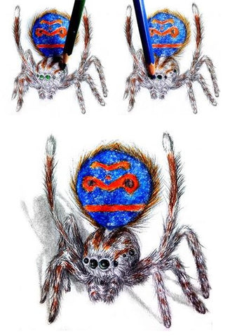 learn-to-draw-books-spiders