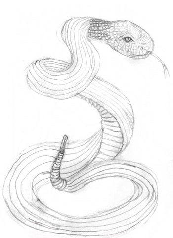 Drawing Snakes How To Draw Snakes For The Beginner Learn To Draw Books