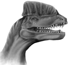 Load image into Gallery viewer, Drawing Dinosaurs - How to draw dinosaurs for absolute beginners