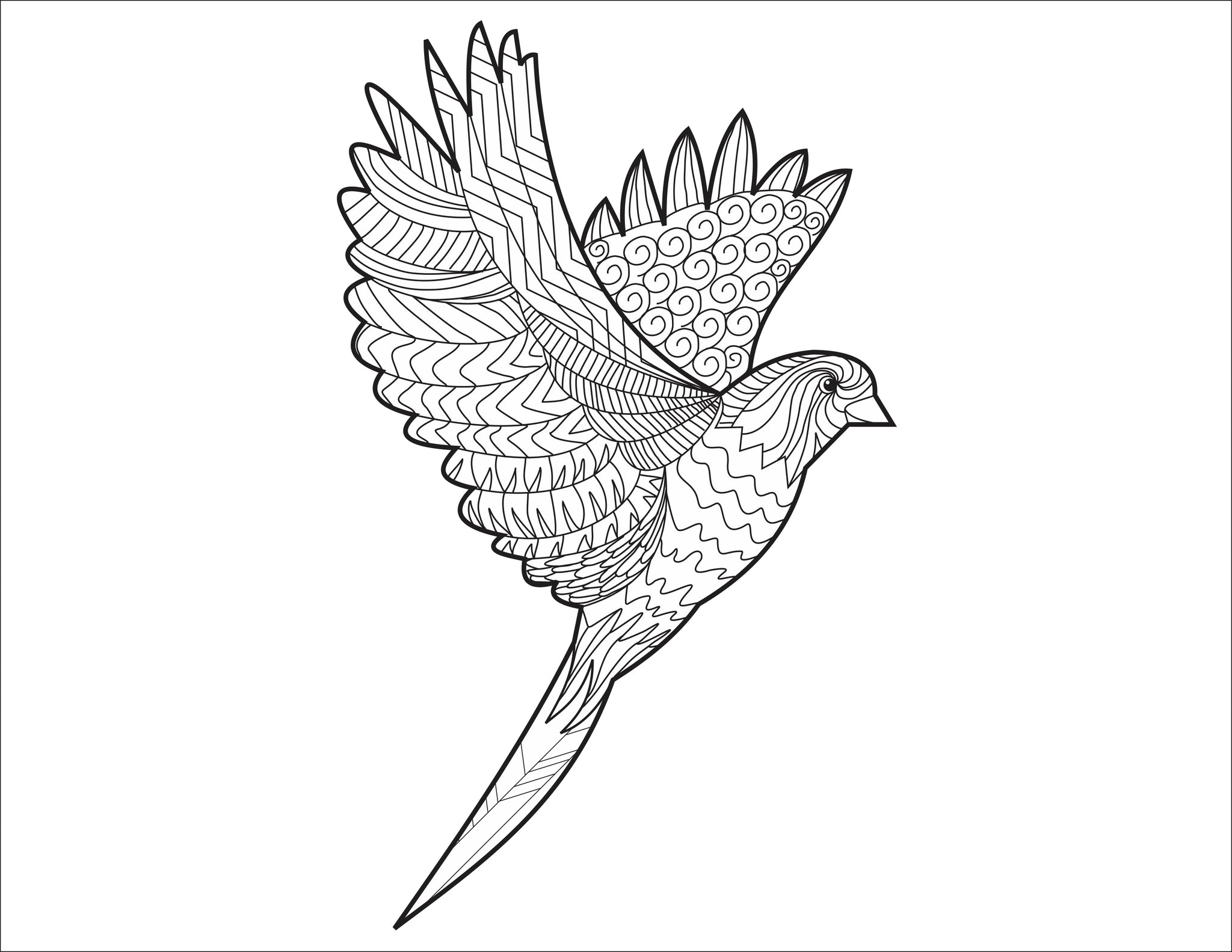Adult Coloring Book Bird Pattern For Beginners Learn To Draw Books