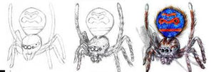 Drawing Spiders Volume 1 - How to Draw Spiders For the Beginner