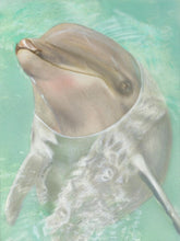 Load image into Gallery viewer, Learn How to Airbrush Aquatic Animals for the Beginner