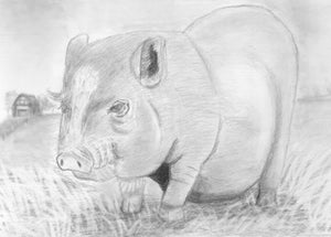 Learn How to Draw Portraits of Domestic Animals in Pencil For the Absolute Beginner
