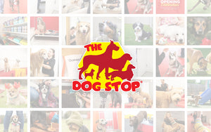 The Dog Stop Partners with Brutus Broth