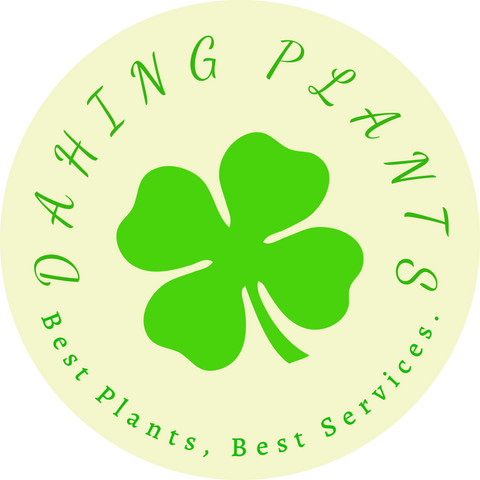 dahing clover plant services