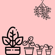 Easy Care Mystery Bundle - Dahing Plants