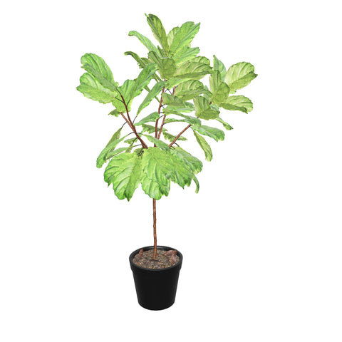Full size fiddle leaf- 3D Pafe Plants