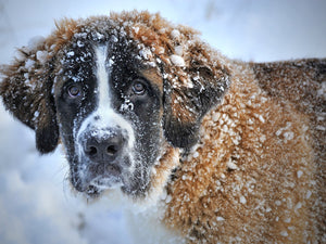 How to Best Protect Your Pets in Winter
