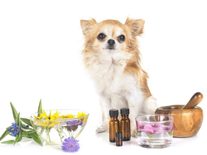How Aromatherapy Can Benefit Your Dog