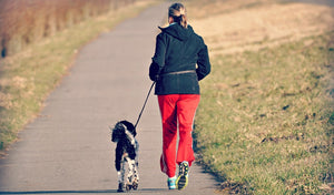 3 Ideas to Spring Into Fitness with Your Dog