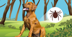 Treating Lyme Disease in Dogs