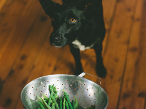 DIY Crunchy Green Bean Dog Treats