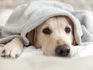 Signs Your Pet Has an Upper Respiratory Infection