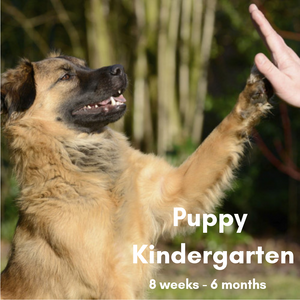Virtual Puppy Kindergarten