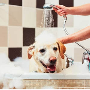 Express Dog Bath: Short Hair