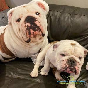 SquishyFacedCrew™ 3D Pet Photo Pillow