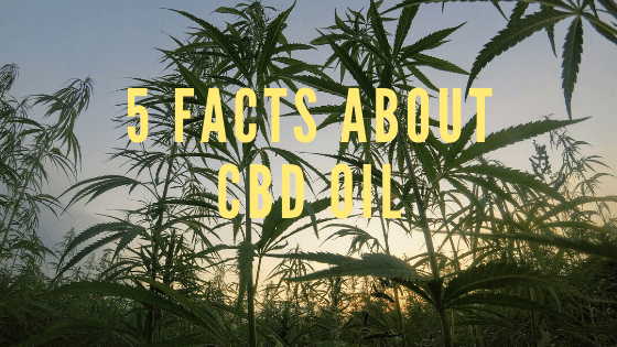 5 Facts about CBD oil