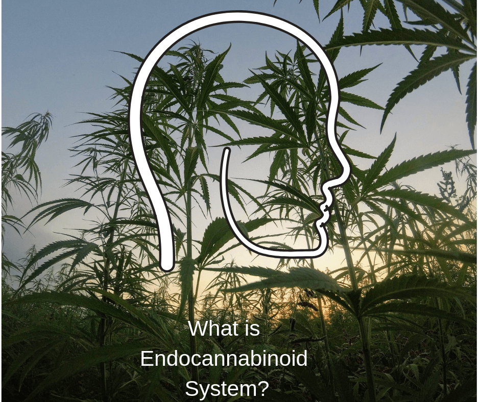 What is Endocannabinoid System?