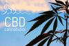 CBD FAQ: You got questions? We got answers!