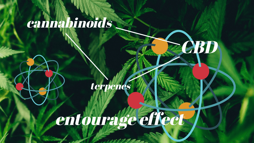 Co je CBD Entourage Effect?