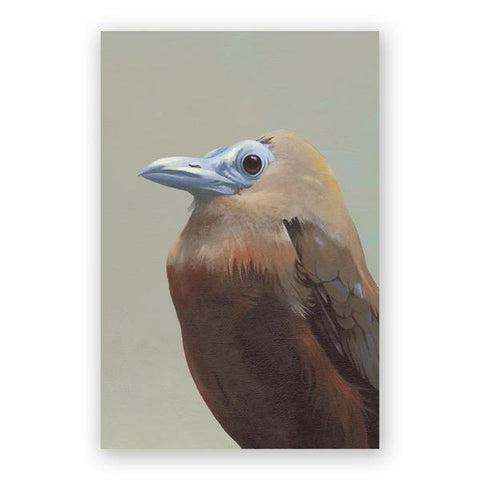 Matt Adrian Fine Art European Doves Postcards - Set of 12