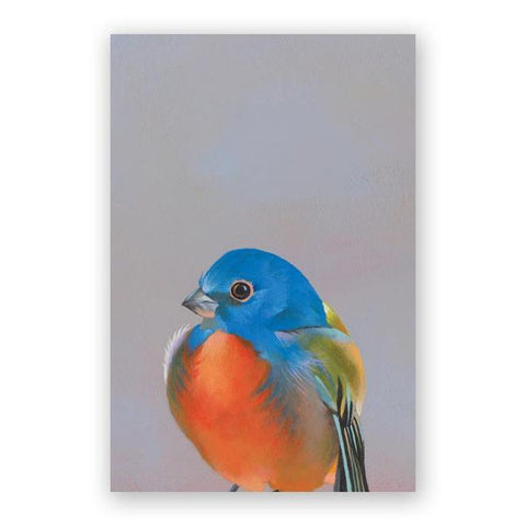 Anxiety Postcards - Set of 12 - Troubled Birds