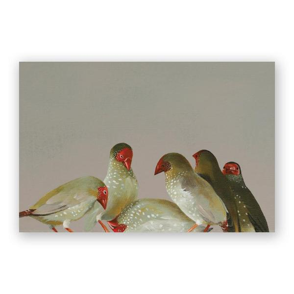 Matt Adrian Star Finches Postcard