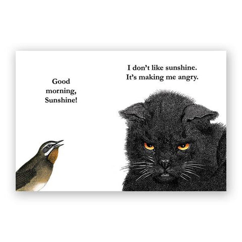 Vodka Kittens Postcards - Set of 12