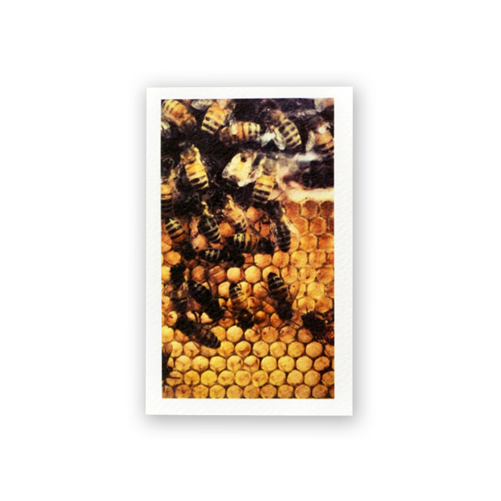 Bees Mini Card