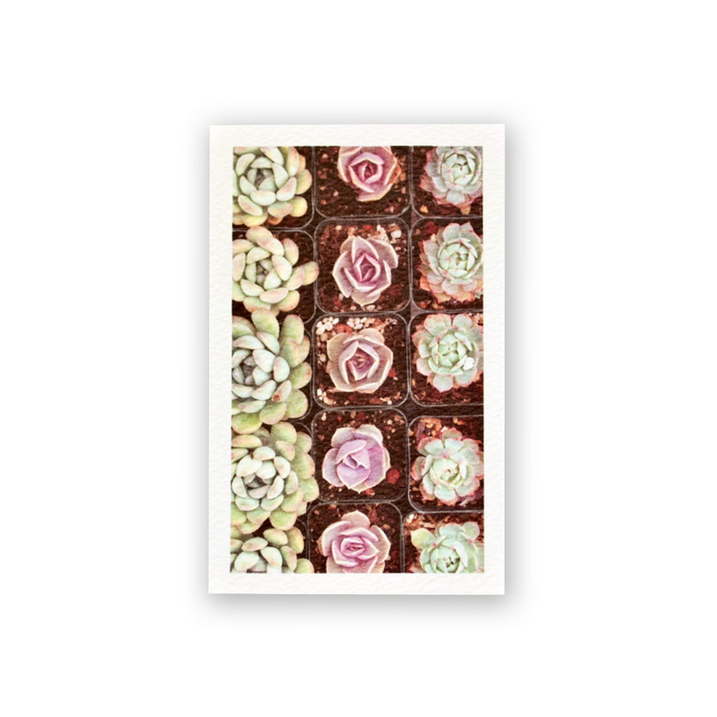Succulent Rows Mini Card