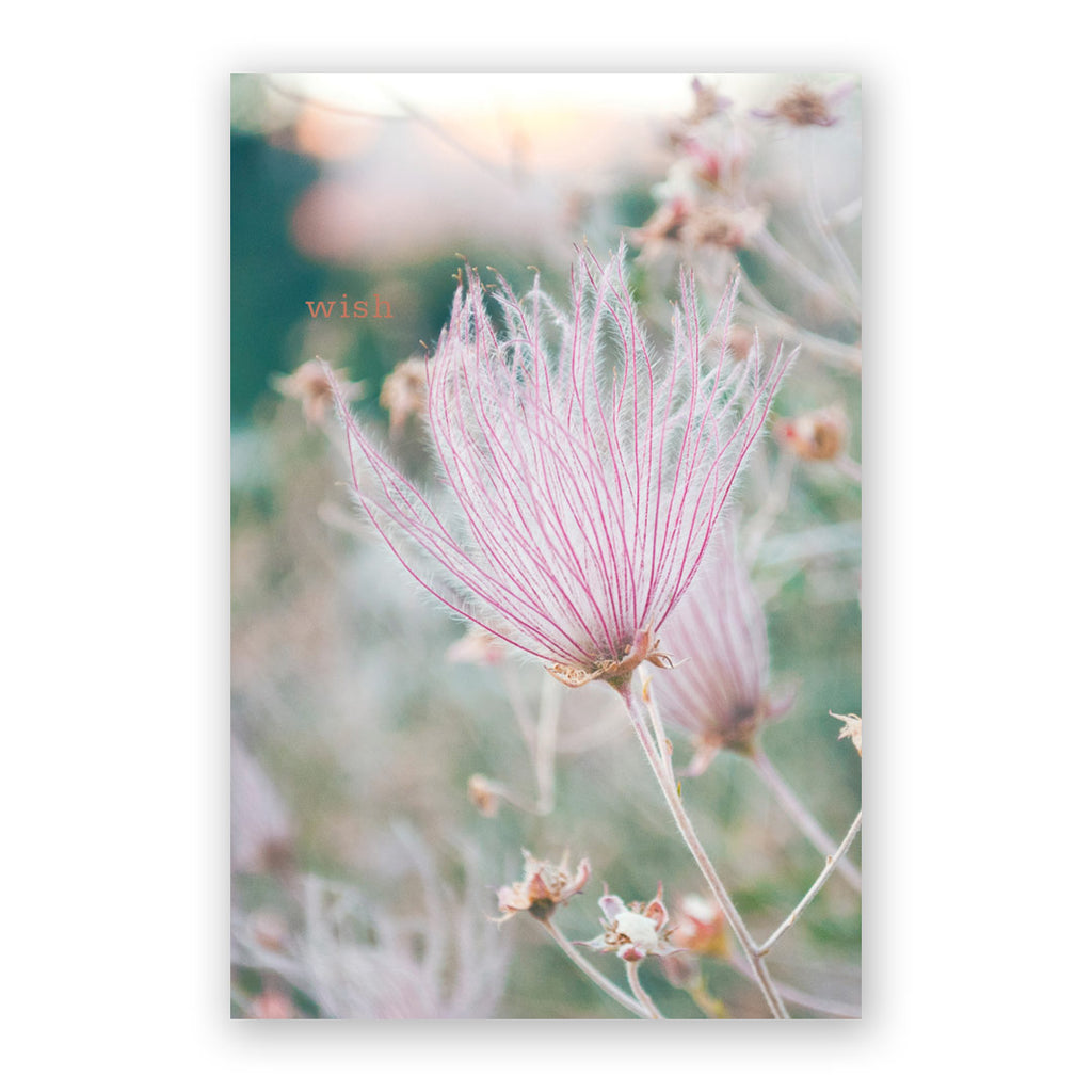 Wildflower Wish Card