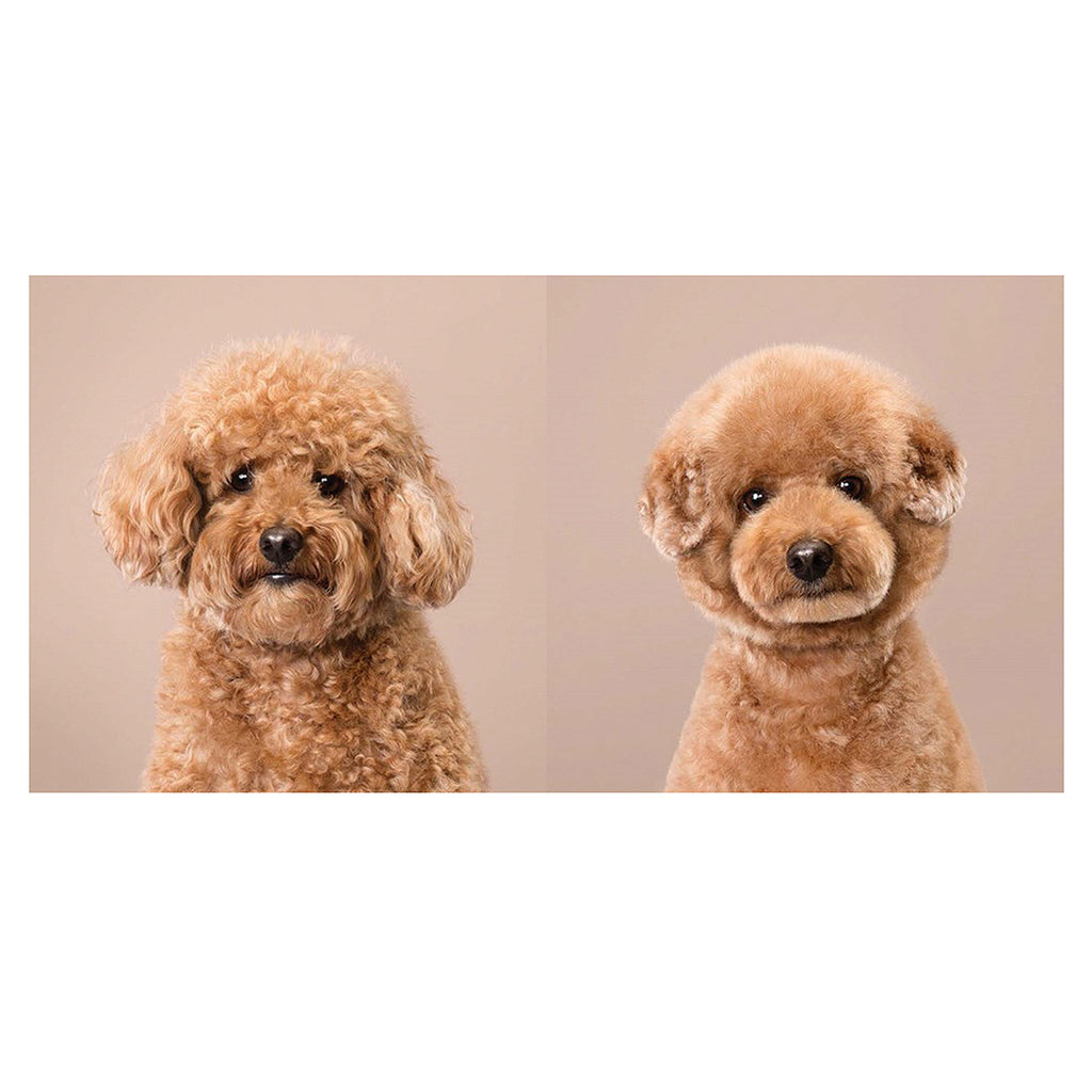 Puppy Styled: Japanese Dog Grooming - Before & After