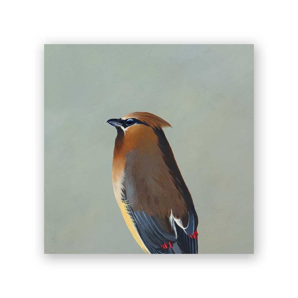 6 x 6 Cedar Waxwing Wings on Wood Decor
