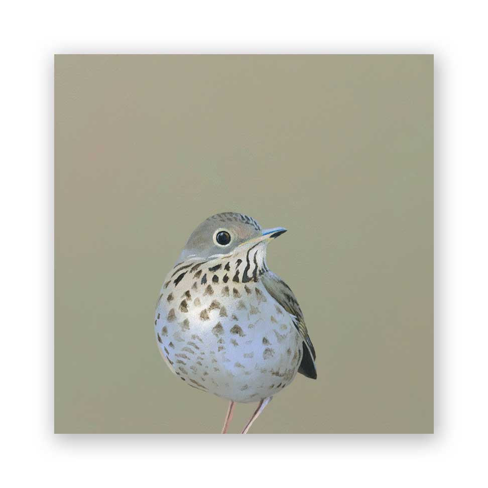 8 x 8 Thrush on Wood Decor