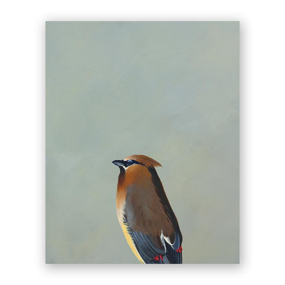 Cedar Waxwing Wood Panel