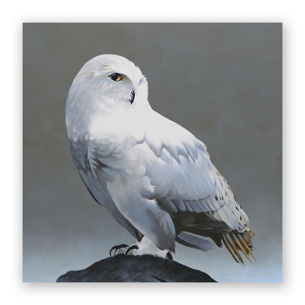 10 x 10 Panel - Snowy Owl on Rock Wings on Wood Decor