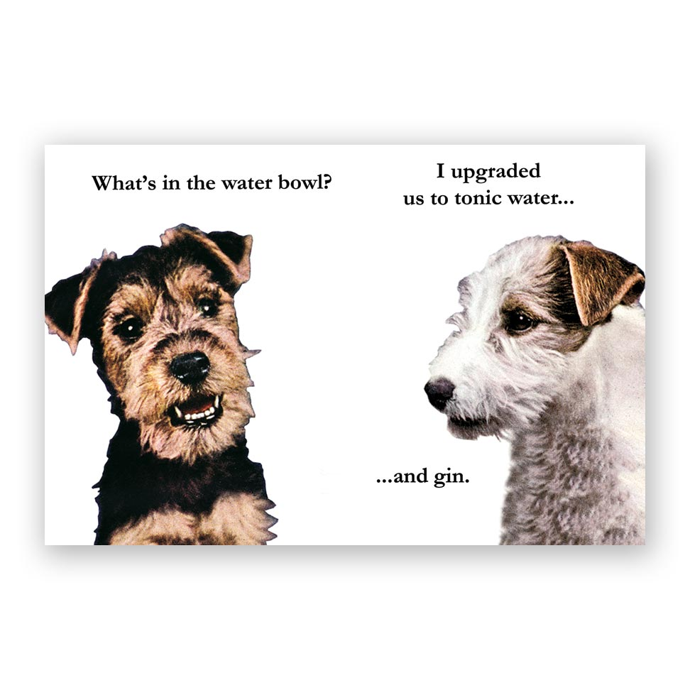 Frantic Meerkat Gin & Tonic Dog Postcards - Set of 12