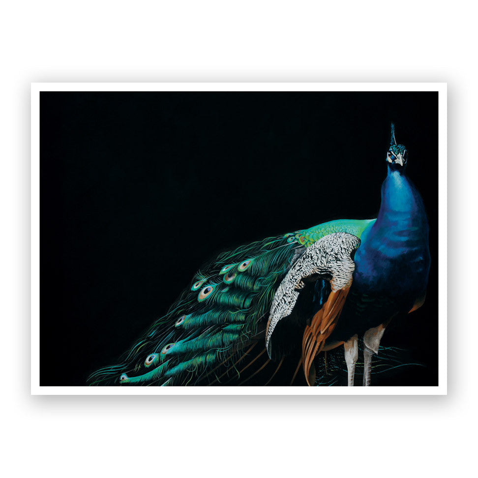Overdressed and Underappreciated Peacock Art Print