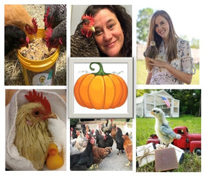 Chicken Moms & Dads You Want to Follow on Instagram This Month - OCTOBER
