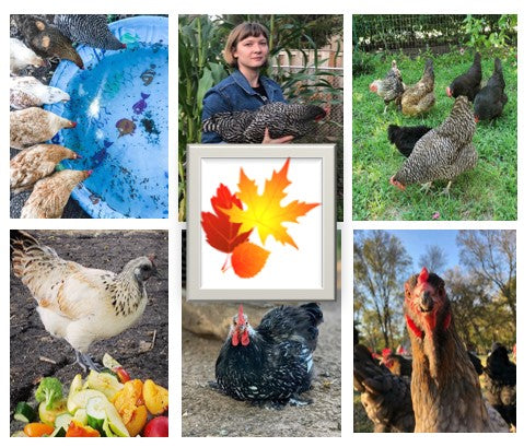 Chicken Moms & Dads You Want to Follow on Instagram This Month - NOVEMBER