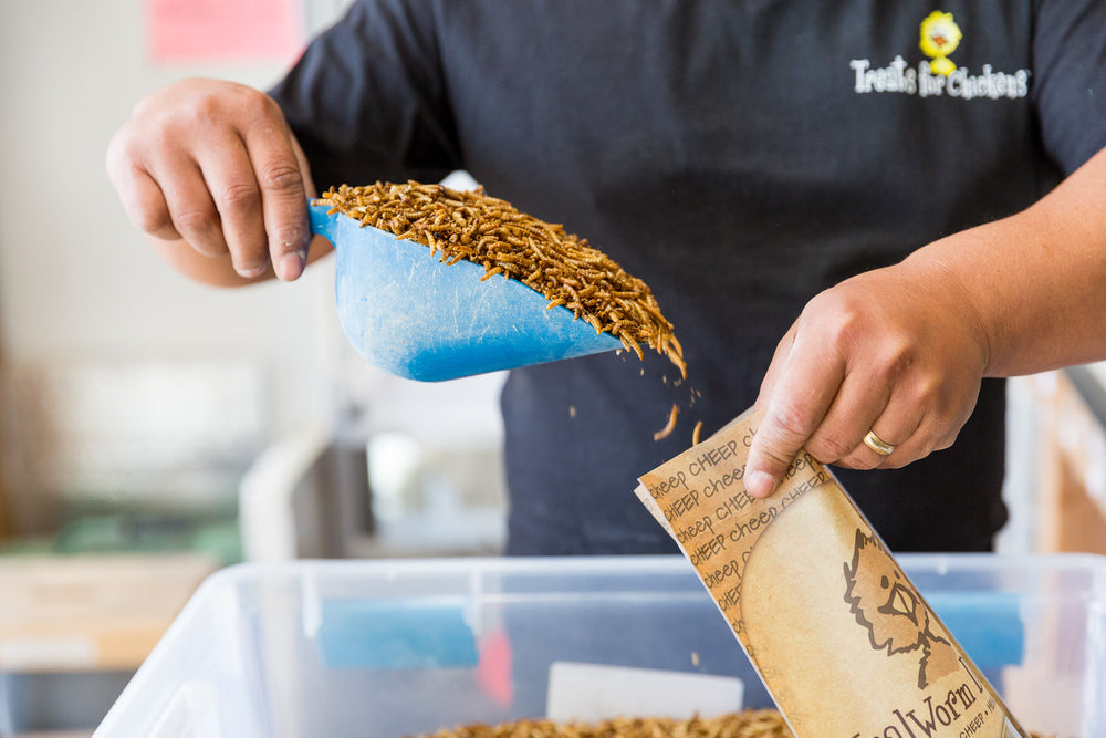 What You Should Know About The Mealworms You Feed To Your Chickens.....